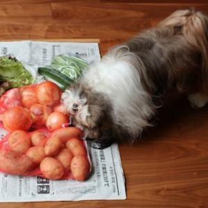 新鮮お野菜が沢山届きました♪