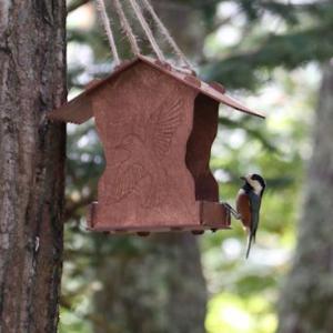 小鳥達のフィーダーを変えたんだけど