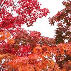 紅葉お散歩「蓼科湖篇」♪