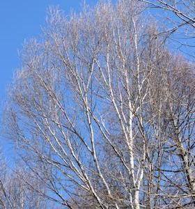 鹿も狸もリスも冬は毛の色が変わるんだね。