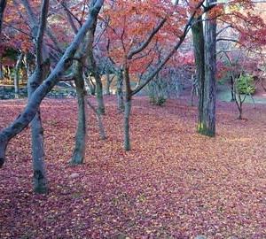 紅葉と黄葉・・落ち葉の絨毯