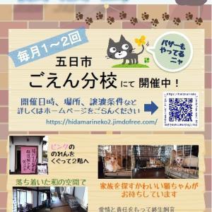 10月22日・保護猫譲渡会を行います!