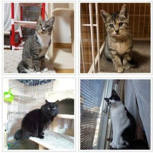 2月2日・保護猫譲渡会を行います!