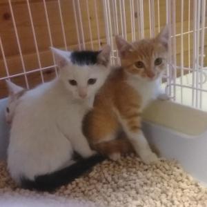 9月15日・保護猫譲渡会を開催します!