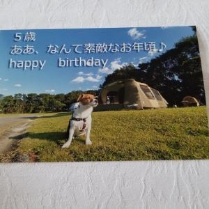 アイビー、くるみちゃんからバースデープレゼントが届く