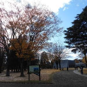 晩秋の歴史館から偕楽園を歩く