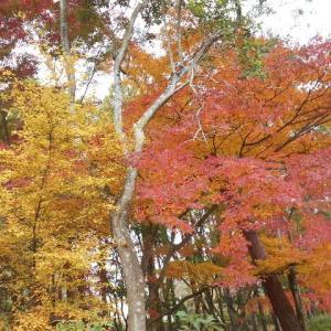 紅葉を見ながらのジョギング
