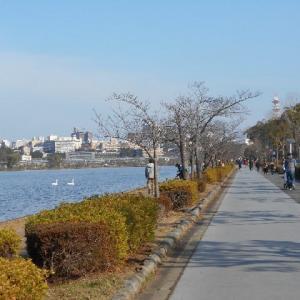 千波湖周辺を走る