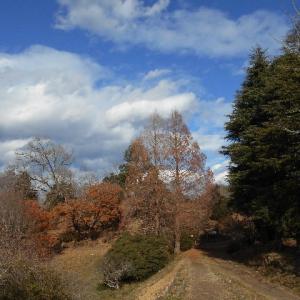 県民の森を走る