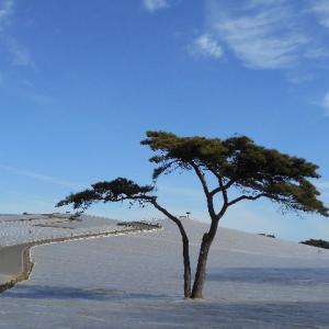 年末の海浜公園を歩きながら