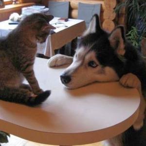 고양이 vs 개 싸움의 승자는 🐶😸가장 웃긴 고양이 영화 ㅋㅋㅋ👀(;・∀・) ナン! (; ∀・)・ デス!! (; ∀ )・・ トー!!!