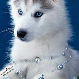 大型犬の可愛さと頼もしさを垣間見る。飼い主が警察に連行されるも、犬が必死の説得交渉で釈放に。コロナ外出違反