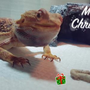 シルクでホワイトクリスマス