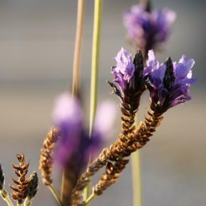 自宅の花達・・・借りたカメラでパチリ