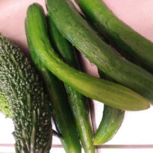 小雨を狙って移動・・・野菜の収穫