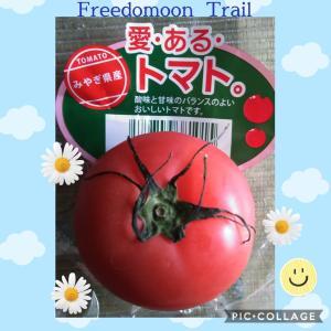 愛・ある・トマト「宮城県産」Good Tomato !! 美味しいトマト🍅