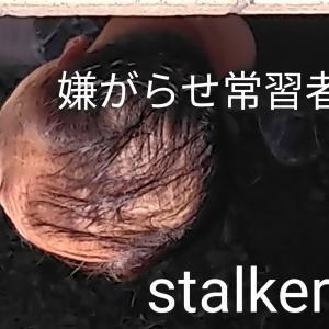 【惨めな老害虫】集団ストーカー犯罪加害者 Organized Gang Stalking.