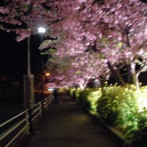 夜桜を見に・・・