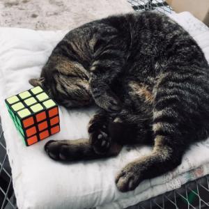 ルービックキューブを完成させました、休憩です?