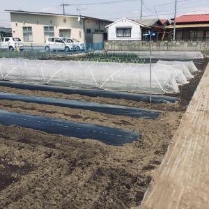 畑に野菜栽培の畝作りが忙しいです、😸猫も手伝っています。