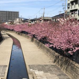 河津桜とオムライス(*^^*)