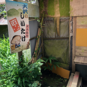 連休2日目は久しぶりにポンポン山から大沢へ(*^^*)