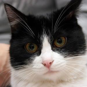 愛猫「マナ」が天に召されました。