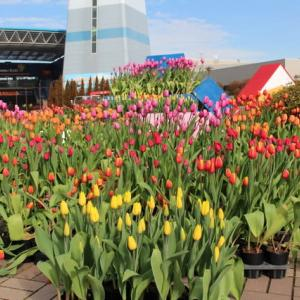 春を待つ木曾三川公園センター(2020年1月22日)