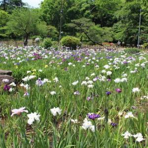 花しょうぶ(鶴舞公園 2020年6月2日)