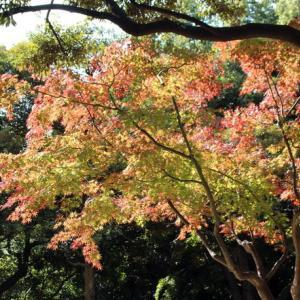 晩秋の白鳥庭園(2020年11月28日)