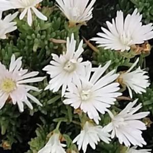 散歩道の花(2021年5月12日)