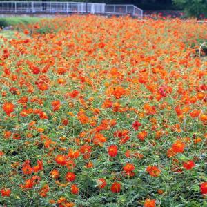 木曽三川公園センター(2021年9月16日)