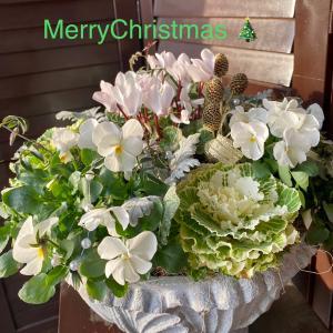 ホワイトクリスマスの寄せ植え
