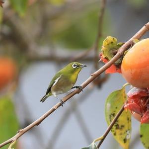 秋の小鳥を撮ってみました。