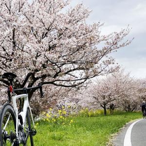ZWIFTでは身に付かないロードバイクスキル!MTBが気付かせてくれた急制動&ブレーキングの大切さ