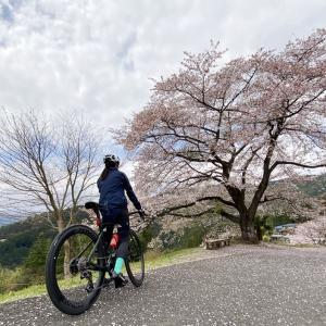 S-Works Tarmac SL7初ライドは埼玉の桜の名所・八徳の一本桜