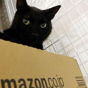 野良猫を保護した初日は大変だぞぅ⁉ ローディー、猫の下僕になる
