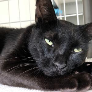 元・野良猫は人間に馴れることができるのか? 2週間目の保護猫生活