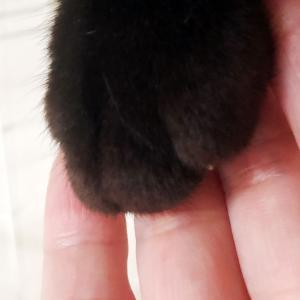 生粋の野良猫がここまで変わった!? 保護猫と暮らして1ヵ月の記録