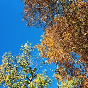 イタリアのグリーンプロジェクト♪~『木の日』って知ってますか?
