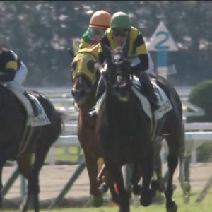 【競馬】菊花賞はワールドプレミアが勝ちます。その理由を一つ一つ丁寧にご説明します。