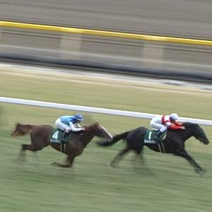 【競馬】急募・・戸崎落馬でダノンキングリーの鞍上