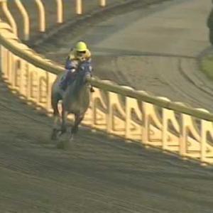 【競馬】クロフネ死亡 老衰のため23歳で死す