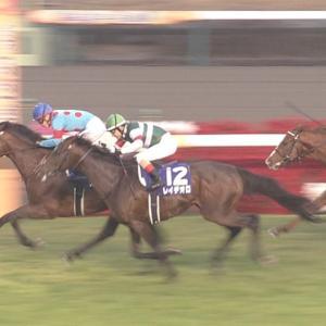 【競馬】悲報・・有馬記念が盛り上がりすぎて朝日杯を楽しみにしてる人ゼロ
