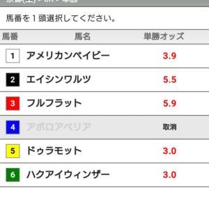 【競馬】京都6レース 5頭立てww
