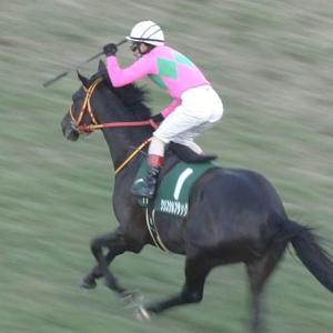 【競馬】キズナ種牡馬成功!!!!!、