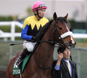 【競馬・新馬戦】新潟5R ディープxアパパネ12冠娘アカイトリノムスメがデビューするぞ