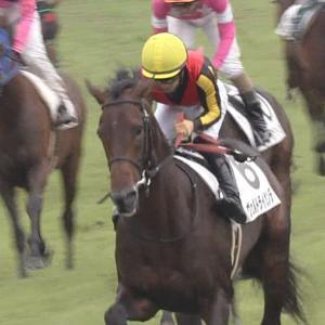 【競馬】どうにかヴェルトライゼンデが菊花賞馬になる方法ありませんか?