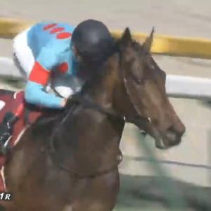 【競馬・日本ダービー】ノーザンFはオーソリティが怪我したのが痛かったな…東京2400m 2:23.0