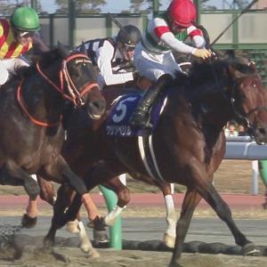 【競馬・チャンピオンズC】クリソベリル川田「本来なら世界を相手にする馬。日本で負けていい馬ではない」